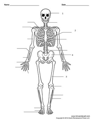 Year 8 Skeleton, Muscles and the Breathing System | Quiz
