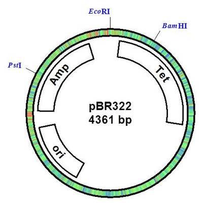 Gen_1_plasmid