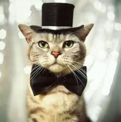 Desktop_cat_in_a_hat