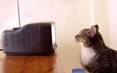 Desktop_cat_watching_telly