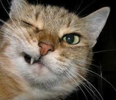 Desktop_crazy_cat