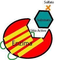 Desktop_enzima