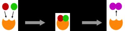 Desktop_enzyme_3