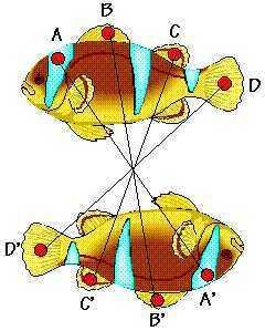 Desktop_simetria2