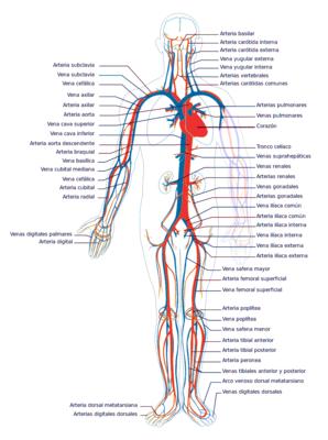 Desktop_sistema_circulatorio