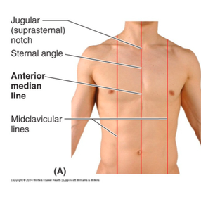 goconqr - rca thoracic wall:, Human Body