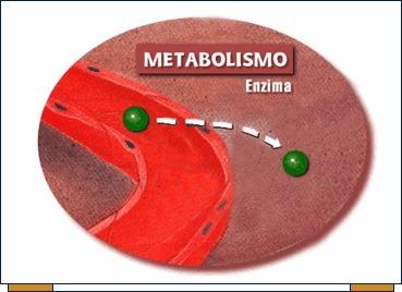 Señales de advertencia en Cómo aumentar el metabolismo usted debe saber