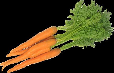 морковка фотостоки