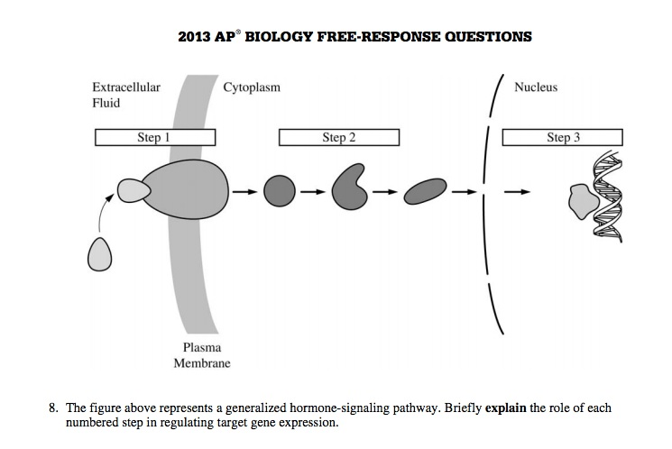 2008 ap bio essay questions Ap biology exams  university of georgia has an ap biology site, with many example essay questions discussed csun has a source book for teaching science with a compilation of ap biology essay questions and the associated scoring guidelines.
