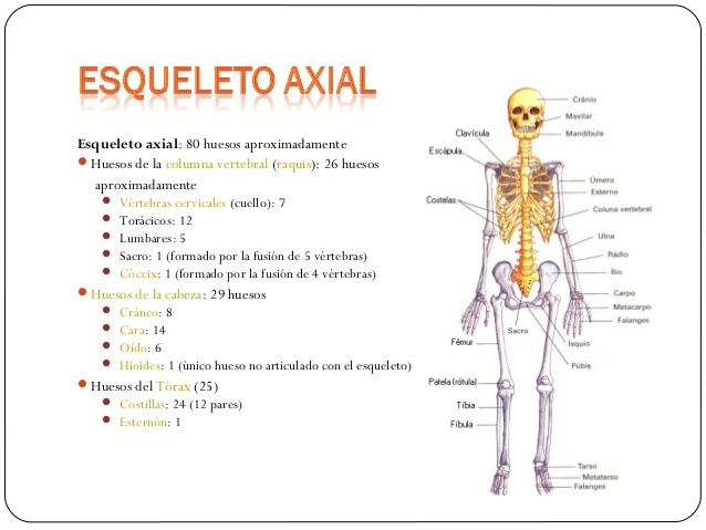 Generalidades de osteología. | Note