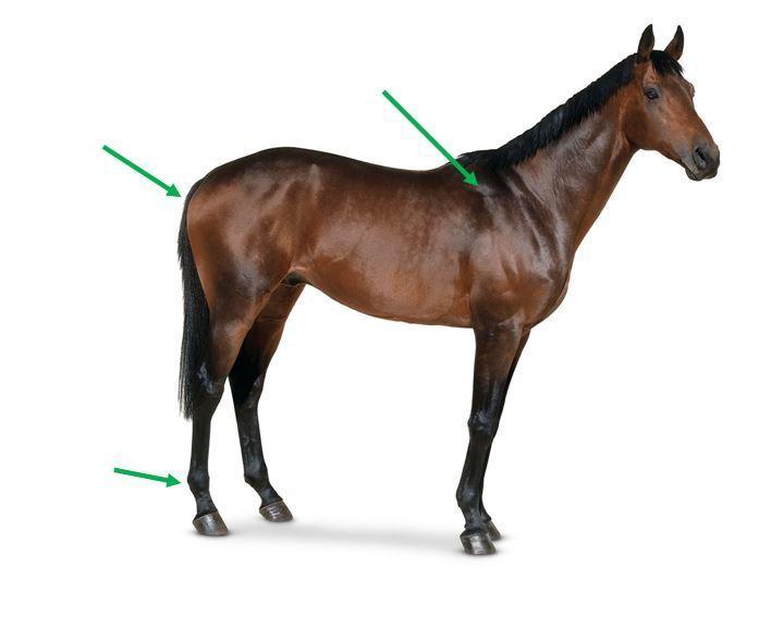 Horse Anatomy Quiz 1 Quiz
