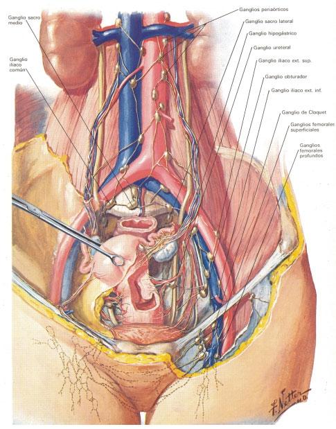 Nervio pudendo femenino | Slide Set