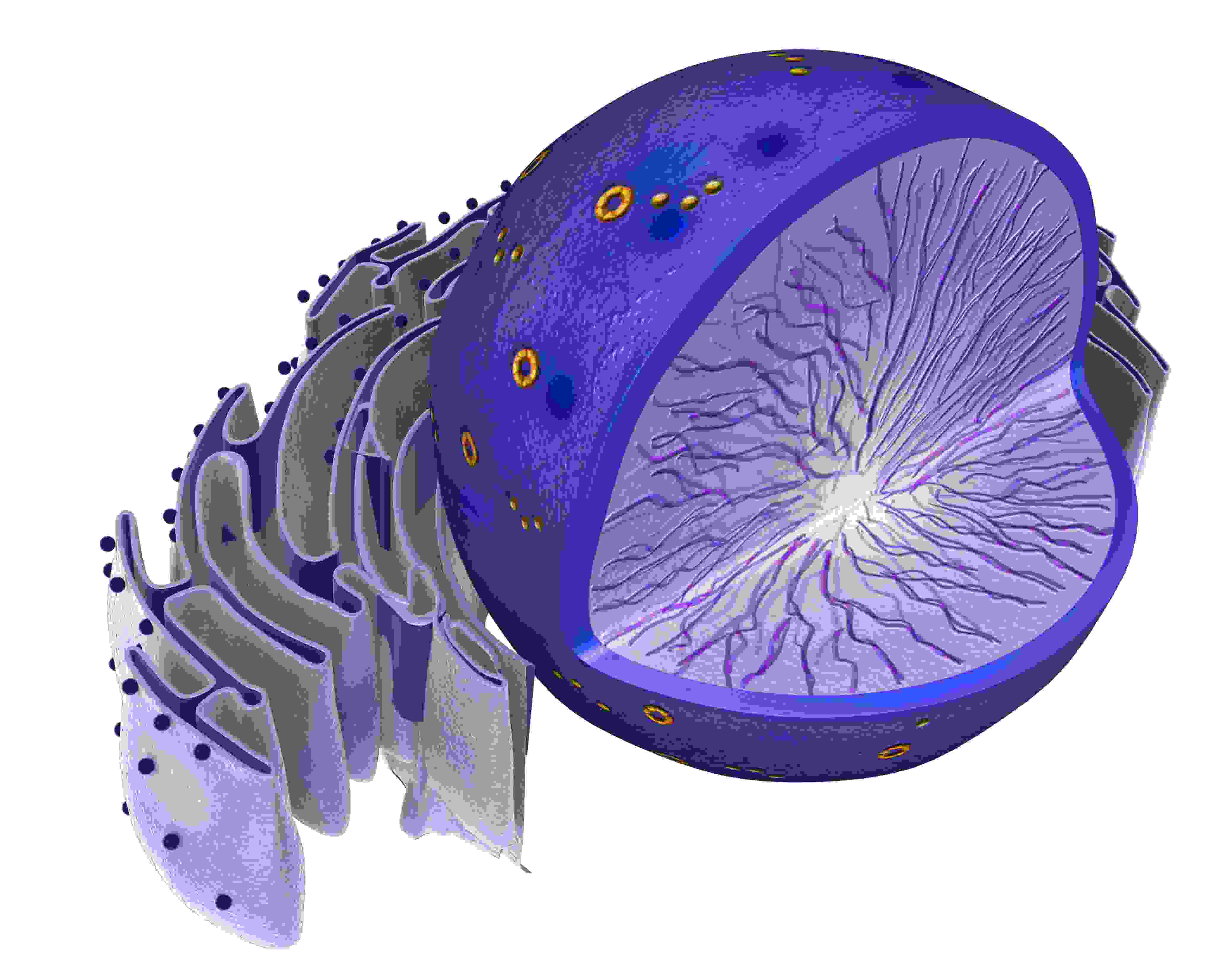 chapter 7 cell structure and function study guide