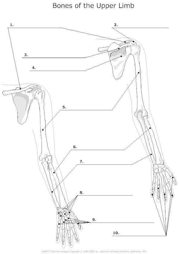 Anatomy Bone Classification