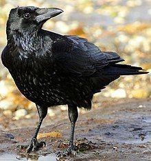 Name that bird | Quiz