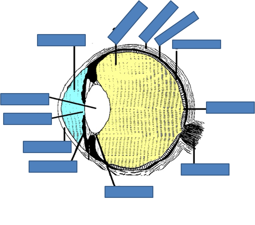 eye labelling quiz