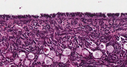 Histology of the Female Reproductive System | Quiz