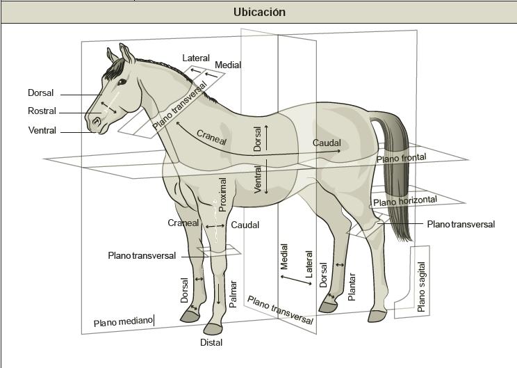 Fichas de Anatomía y Fisiología | Flashcards