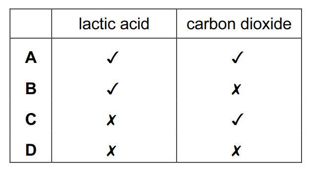 0654 Biology Topic B8 Gas Exchange & Respiration Quiz | Quiz