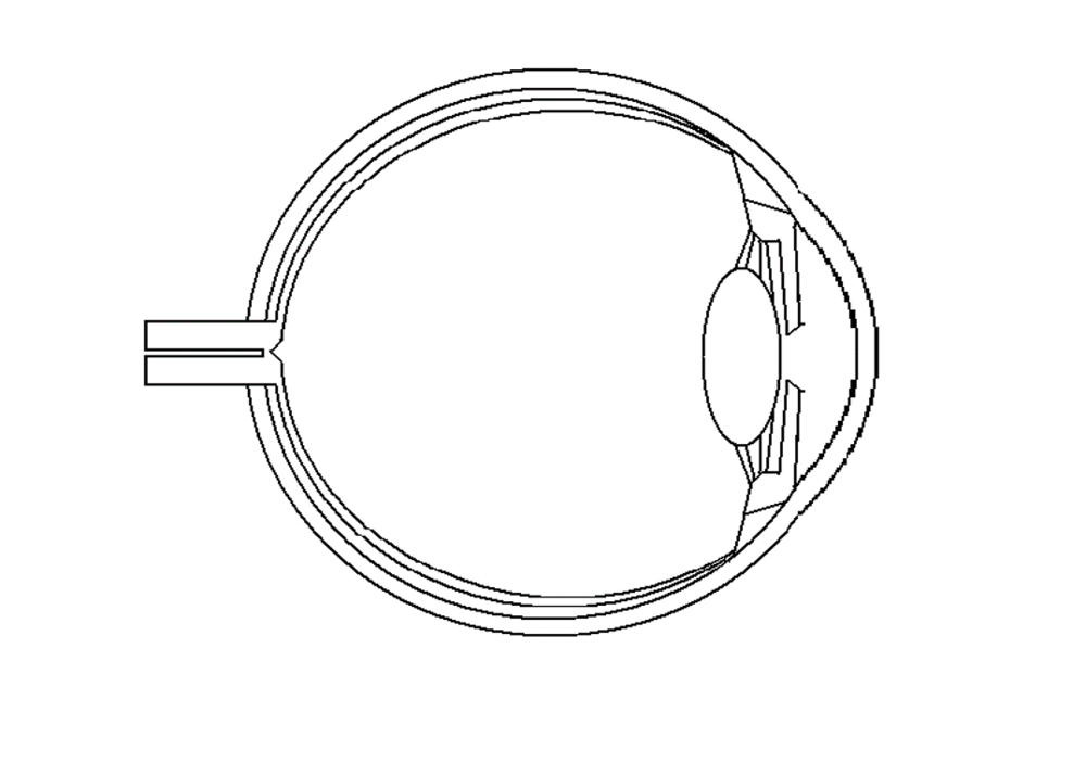 label the diagram of the eye