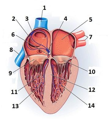 Desktop_heart