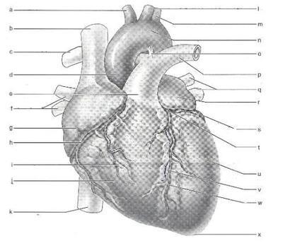 Desktop_heart_2