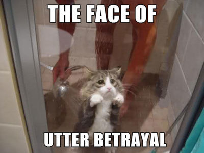 Desktop_funny-cat-bathroom-sad-face