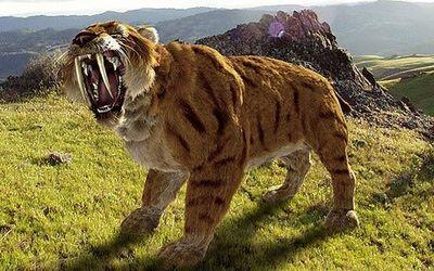 Desktop_carnivore