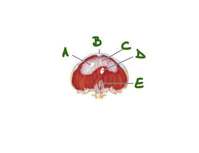 Desktop_b77c47f8-ea12-4415-a477-9b0a5720524c