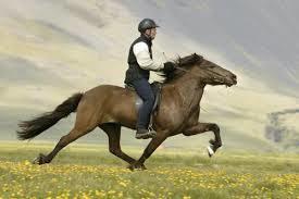Desktop_horse_riding