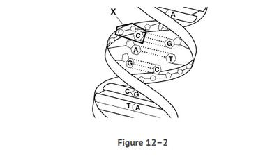 Chapter 12 Quiz 2 | Quiz
