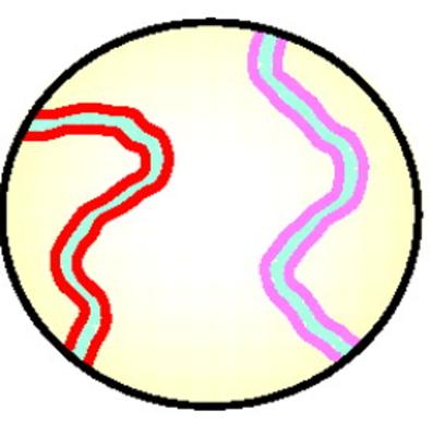 Leptotene_chromosomes