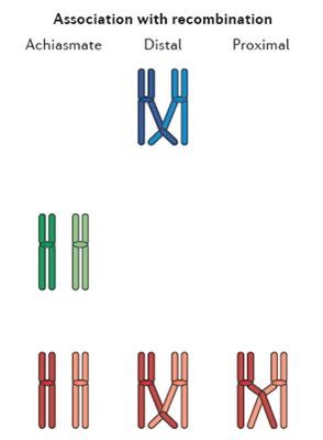 Trisomy_recombinations