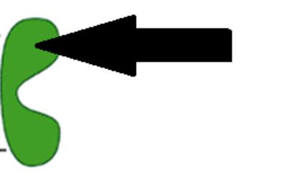 Gro-el_monomer_binding_domain
