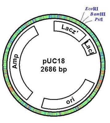Gen_2_plasmid