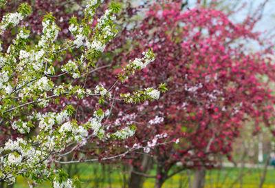 Desktop_printemps