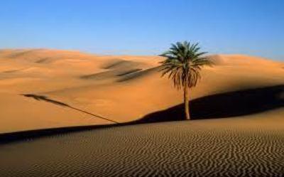 Desktop_desert