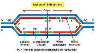 Desktop_2genetica6_clip_image014
