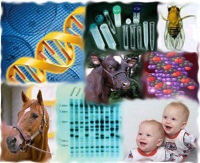 Desktop_genetica
