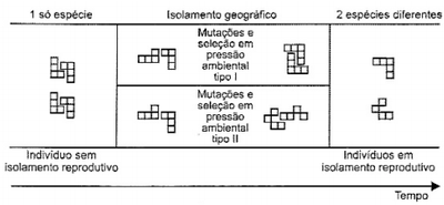 Desktop_grafico1