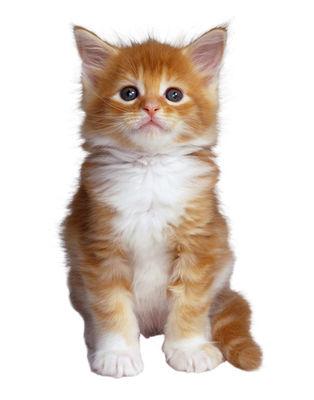 Desktop_gato