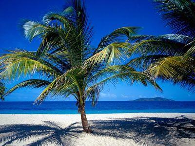 Desktop_palm_tree