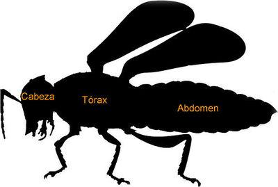 Desktop_insecto2