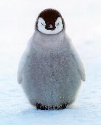 Desktop_penguin