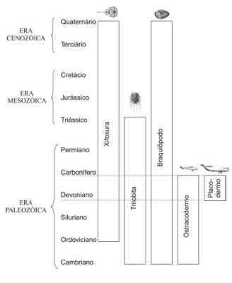 Desktop_tabela