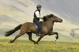 Desktop horse riding