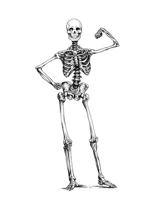 Desktop_esqueleto_masculino