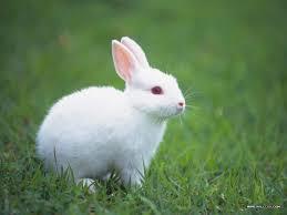 Desktop_rabbits