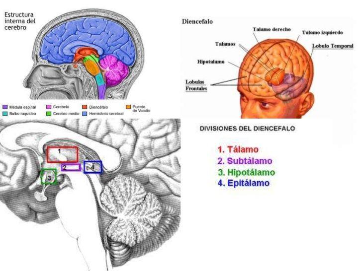 Diencéfalo Mind Map
