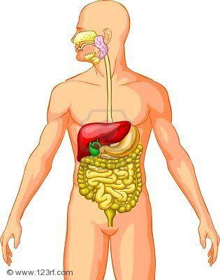 Desktop_4394022-sistema-digestivo